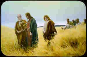 In the Wheat Fields