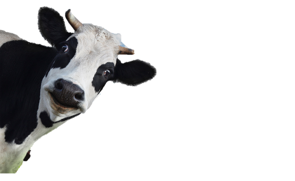 god as cow beyond contradiction