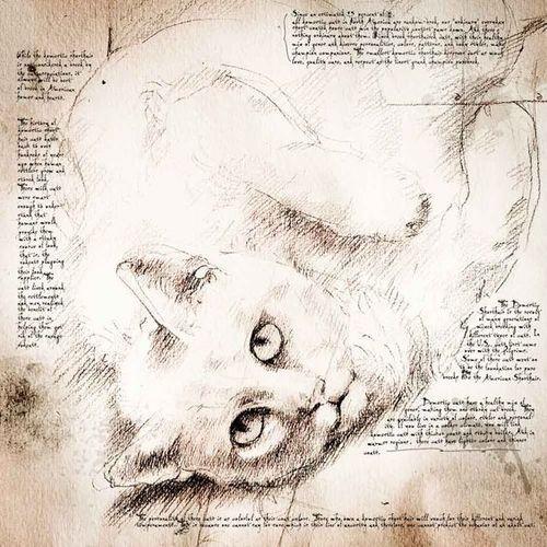 Leonardo cat 2