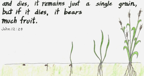 grain-of-wheat-dies-to-bear-much-fruit